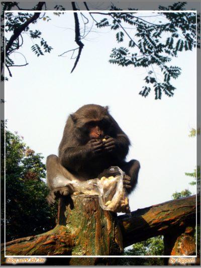 烏山、彌猴、鋼管雞 - 04