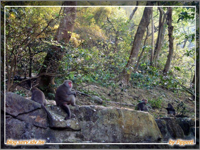烏山、彌猴、鋼管雞 - 06