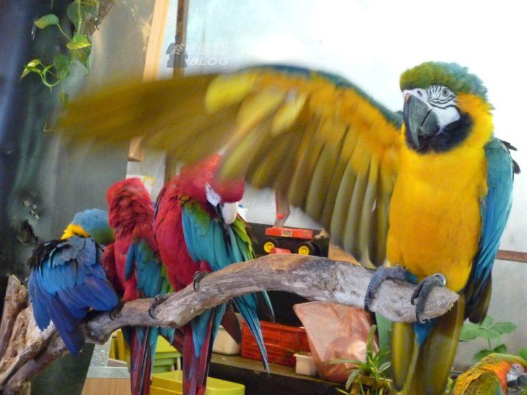 鸚鵡 (by PipperL)
