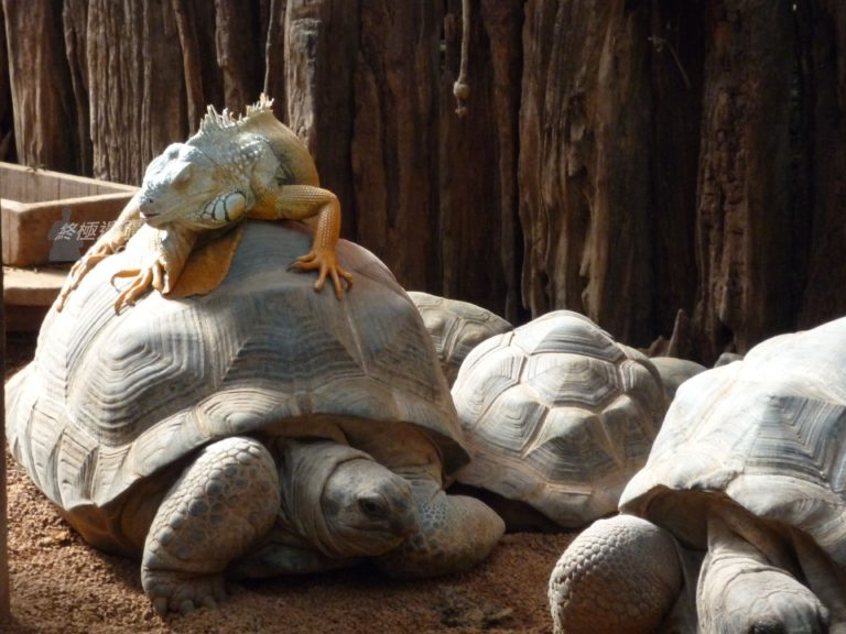 Turtle as my ride (by PipperL)