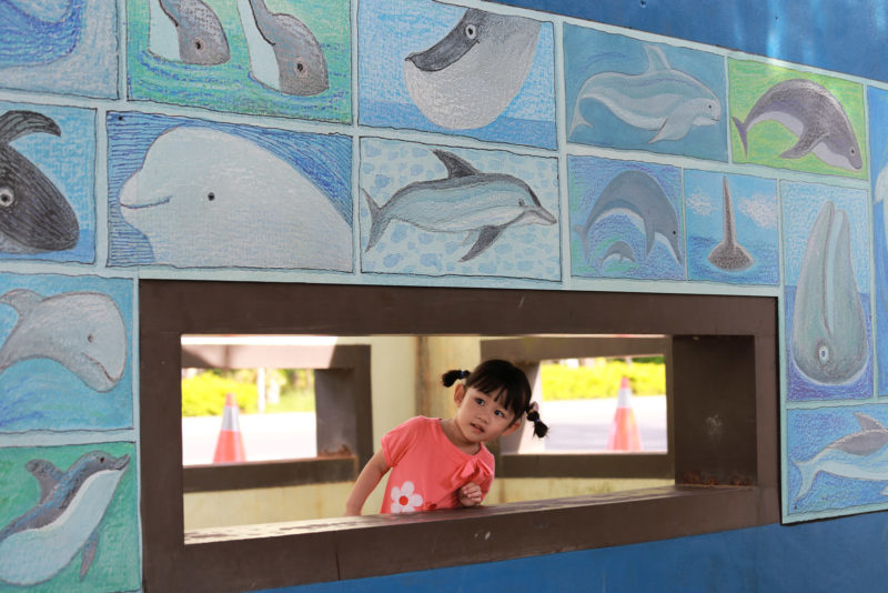 Dolphin pool!