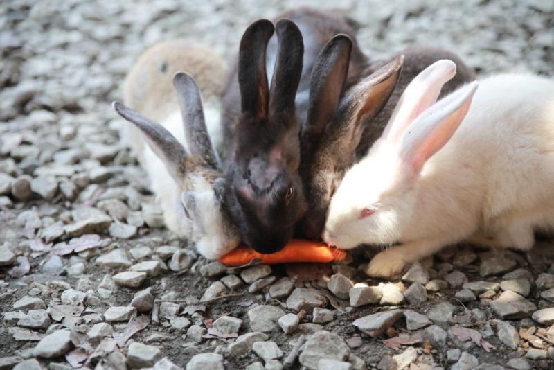 Enjoy their lunch