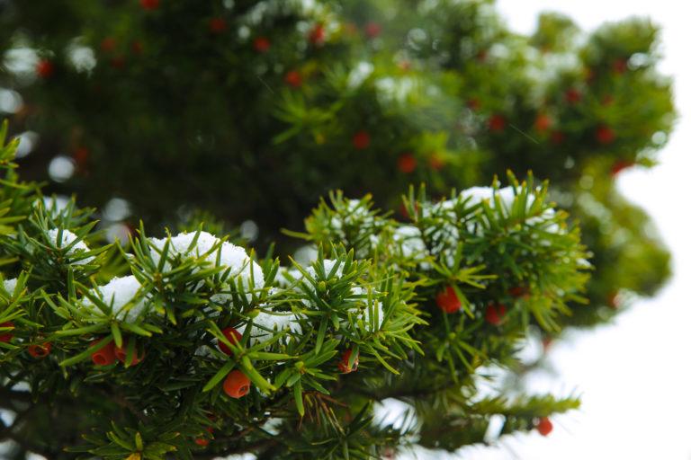 紅、綠、白雪,好美