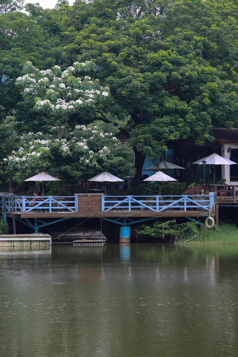 遠眺桐花。可惜,沒機會好好坐在桐花樹下喝杯咖啡。(這家叫做十二咖啡館)